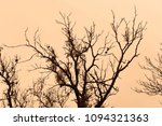 dry branches of trees against a ... | Shutterstock . vector #1094321363