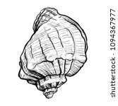 handdrawn sketch of a seashell... | Shutterstock .eps vector #1094367977