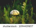champignon mushroom grass... | Shutterstock . vector #1094439857