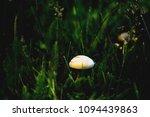 champignon mushroom grass... | Shutterstock . vector #1094439863