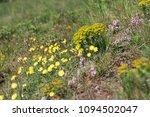 wildflowers   flora of the...   Shutterstock . vector #1094502047