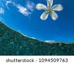 underwater flora leaf background   Shutterstock . vector #1094509763