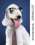 Funny White Dog In Glasses On...
