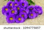 chrysanthemums  chamomile... | Shutterstock . vector #1094775857