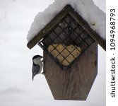 Small photo of a black-capped chickadee is hanging on a suet feeder in the middle of a snowy winter; Harrisonburg, VA, USA