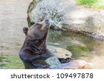 Brown bear smiling - stock photo