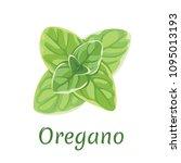 oregano isolated on white... | Shutterstock .eps vector #1095013193