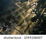 Sun Rays Penetrating Through...