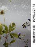dry flowers details   Shutterstock . vector #1095132473