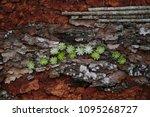 mix tree bark texture  free...   Shutterstock . vector #1095268727