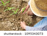 Small photo of A farmer in his land checks his newly sown seedlings and cares for them by fertilizing them and watering them with love. Concept of: nature, bio, agriculture.