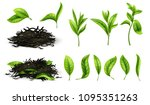 close up realistic tea dried... | Shutterstock .eps vector #1095351263