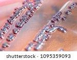 colony characteristics of... | Shutterstock . vector #1095359093