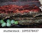 mix tree bark texture  free...   Shutterstock . vector #1095378437