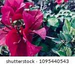 this is violet flora    Shutterstock . vector #1095440543