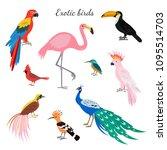 set of exotic birds on white... | Shutterstock .eps vector #1095514703