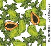 papaya hand drawn seamless...   Shutterstock .eps vector #1095563123