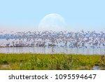 bird paradise  manyas lake ... | Shutterstock . vector #1095594647