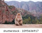 monkey sitting and watching on... | Shutterstock . vector #1095636917