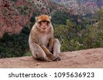 monkey sitting and watching on... | Shutterstock . vector #1095636923