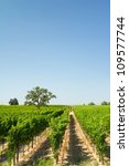 Beautiful vineyard and winery at Sonoma County, California - stock photo