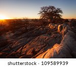 Sunset over a boabab tree at kubu island - stock photo