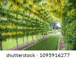 dunedin  otago new zealand...   Shutterstock . vector #1095916277
