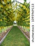 dunedin  otago new zealand...   Shutterstock . vector #1095969113