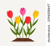 red and yellow tulips on a... | Shutterstock .eps vector #1096008647