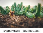 soft thorny cacatus on the...   Shutterstock . vector #1096022603