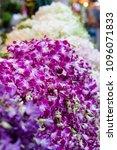bangkok flower market  pak...   Shutterstock . vector #1096071833