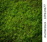 Green Grass Surface
