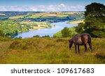 Exmoor Pony And Wimbleball Lak...