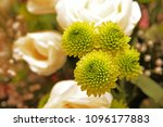 details of the flower  which in ...   Shutterstock . vector #1096177883