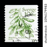 Small photo of MOSCOW, RUSSIA - MAY 10, 2018: A stamp printed in Sweden shows Norway maple (Acer platanoides), Fruits serie, circa 1983