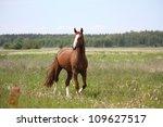 Beautiful Free Chestnut Horse...