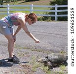 woman reaching toward snapping turtle - stock photo