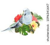 budgerigar  blue pet parakeet ... | Shutterstock .eps vector #1096341647