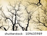 bare branches of trees in sepia - stock photo
