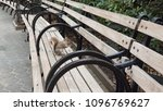 Small photo of brown grey Sciuridae Squirrel one the bench in the city park at, Manhattan New york