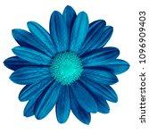 flower dark blue  cyan daisy... | Shutterstock . vector #1096909403