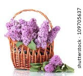 Beautiful Lilac Flowers In...