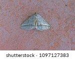 small white or silver fan foot... | Shutterstock . vector #1097127383