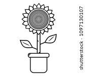 black   white potted sunflower... | Shutterstock .eps vector #1097130107