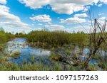 landscape with bog under nice... | Shutterstock . vector #1097157263