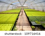 Greenhouse for the cultivation of vegetables - stock photo