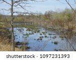 Small photo of Pond in the park Alewife brook reservation