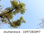 low angle view of tree | Shutterstock . vector #1097282897