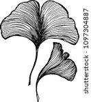vector of leaves ginkgobiloby.... | Shutterstock .eps vector #1097304887