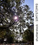 Small photo of Tink'sTreeDelight - an upward view of the sun poking through the trees